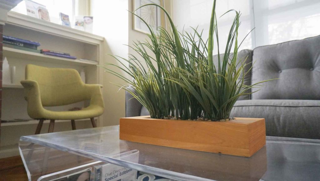 plant on a clear table at Little Family Dentistry in Bayonne New Jersey